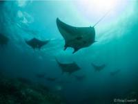 komodo-diving-liveaboard-1
