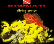 Logo Kornati Diving Center